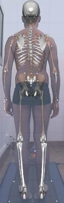 1-corpo-posteriore